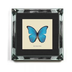 'Morpho Didius' Blue Butterfly Framed Art Print