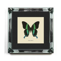 'Papilio Blumei' Butterfly Framed Art Print